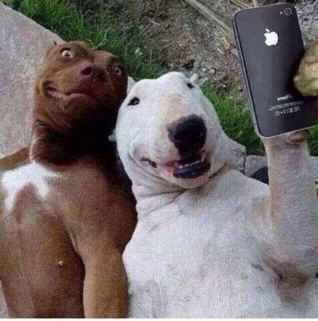 Sunday Selfie Dogs HaveFun Bulldogsworldwide Animals Enjoying Life