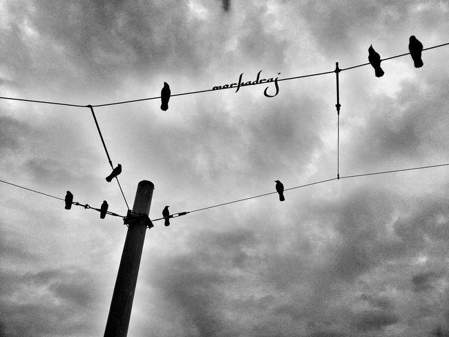 Serpme kahvaltı... Bw_collection Monochrome Crow Bnw