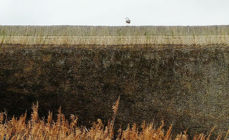 Bird Outdoors No People Nature Day Gull Thatched House Thatchedroof Roof