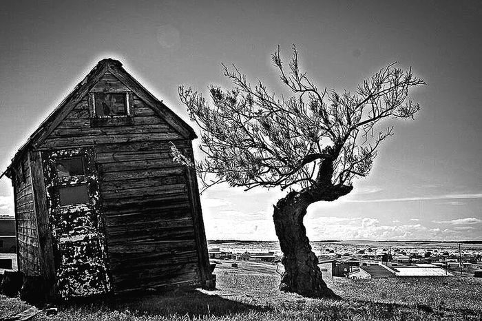 Tree Abandoned House Winter The Past Old Ruin Building Exterior Clear Sky Wood - Material Farmhouse No People Architecture Cabopolonio Uruguay Beautiful Beautiful Nature Beautifulplace Landscape Sand Sea Litllethings Magical Places Energy Place