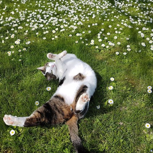 High angle view of cat resting on grass