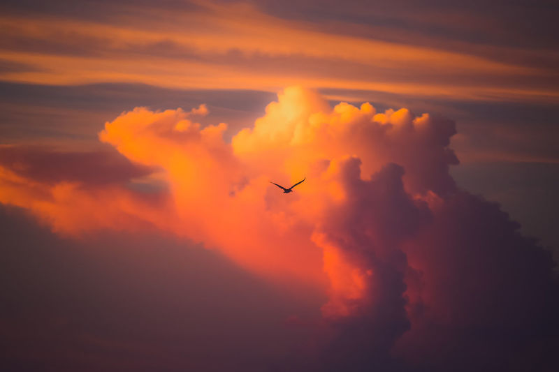 Bird Flying Against Cloudy Sky