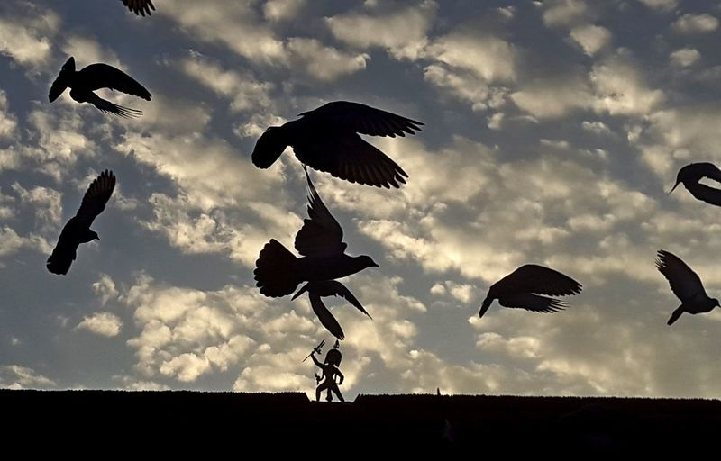 ASIA Lalitpur, Nepal Nepal Patan Durbar Square Animal Bird Cloud - Sky Early Morning Flock Of Birds Flying Group Of Animals Low Angle View Motion No People Pigeons Silhouette Sky Vertebrate