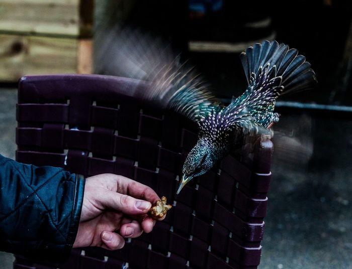 Cropped image of hand feeding bird