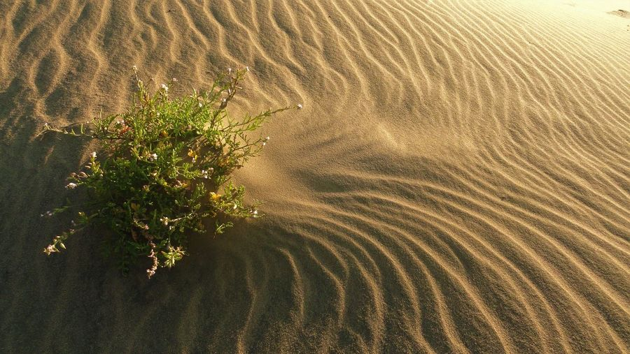 High angle view of plants on beach