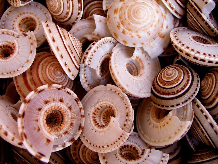 Shells. Abundance Shells Sea Life Seashell Beauty In Nature Nature Photography Nature Seafood No People
