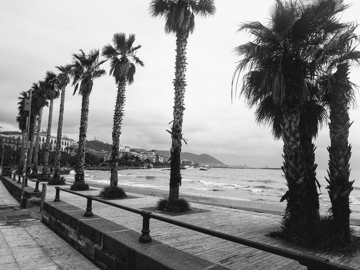 Salerno Salerno Salerno♡ Salernocity Salerno Italy Tree Water Beach Sea Palm Tree Rope Swing Sky Horizon Over Water Growing