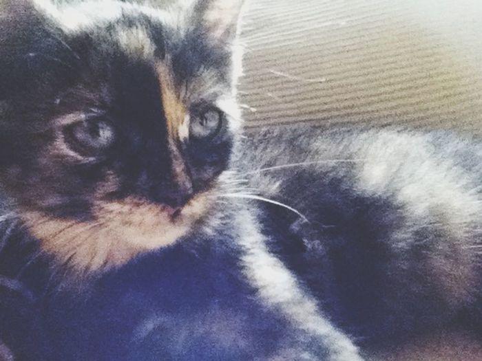 Katniss ! Kitten Cute Hunger Games Katniss