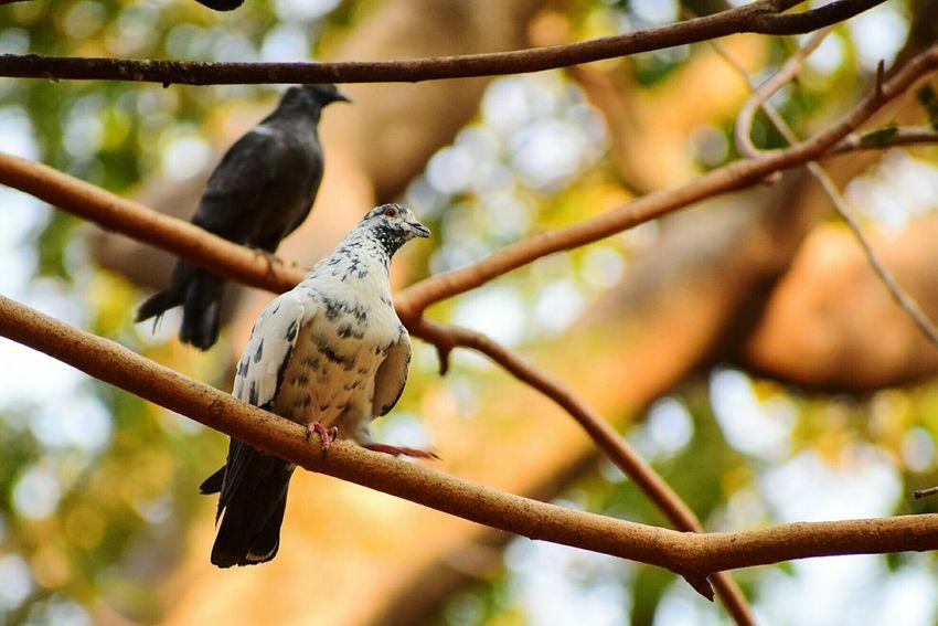 Park Tree EyeEm Selects Bird Perching Tree Branch Defocused Animal Themes Close-up