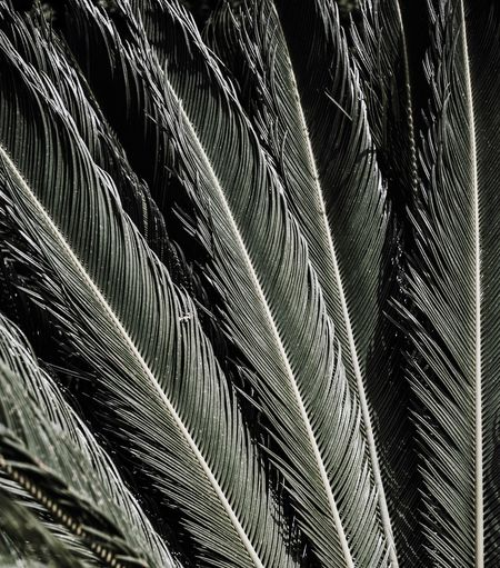 Palm Palm Tree Pattern No People Low Angle View Full Frame Backgrounds Close-up Day Nature Outdoors Repetition Abstract Leaf Textured  Detail Plant Part Sunlight Modern Metal Growth Palm Leaf