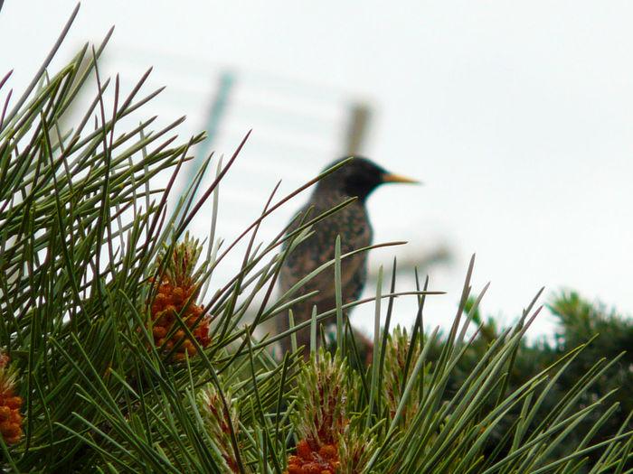 Close-up of bird on grass