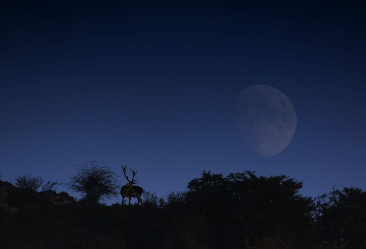 Silhouette of horse against sky at night