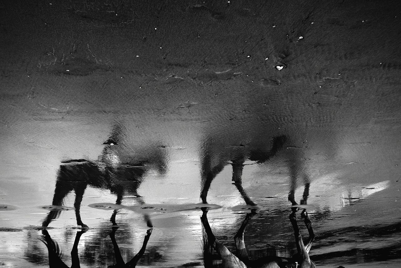 Upside down image of horse walking on wet street