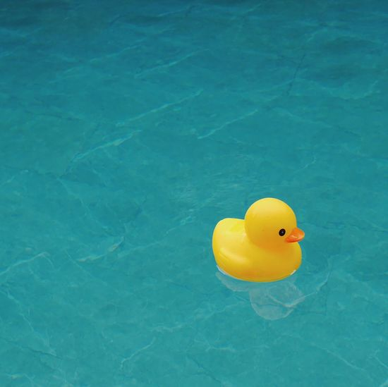 High Angle View Of Rubber Duck Floating In Swimming Pool