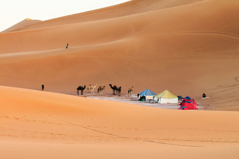 Camp in sahara desert, morocco Camping View Arid Climate Beach Camels Day Desert Domestic Animals Famous Place Landscape Lifestyles Mammal Men Nature One Person Outdoors People Real People Sahara Sand Sand Dune Scenics Sky Travel Destinations Women