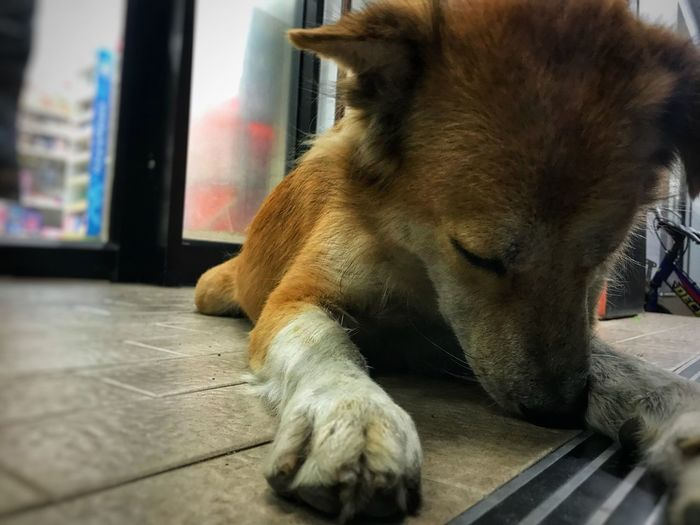 The dog is abandoned at the convenience store. Alone Lonely Dog Lonely Sad Dog Mammal Animal Themes One Animal Animal Domestic Animals Pets Domestic Dog