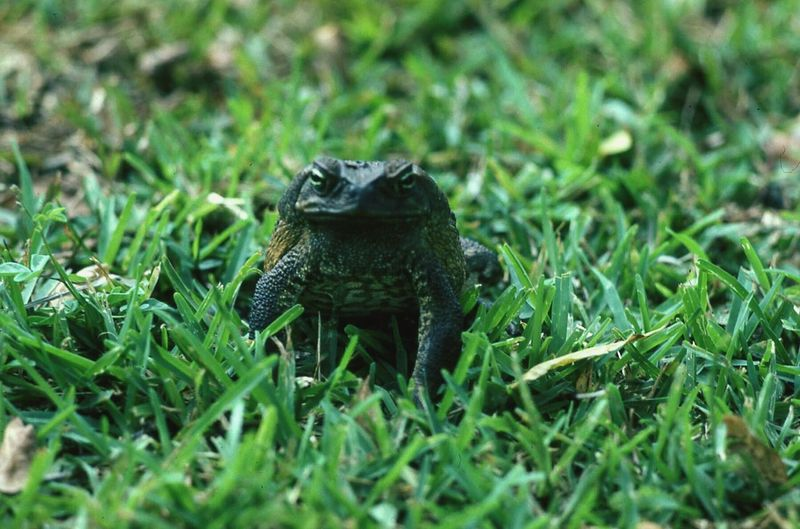 Frosch frog animal meadow