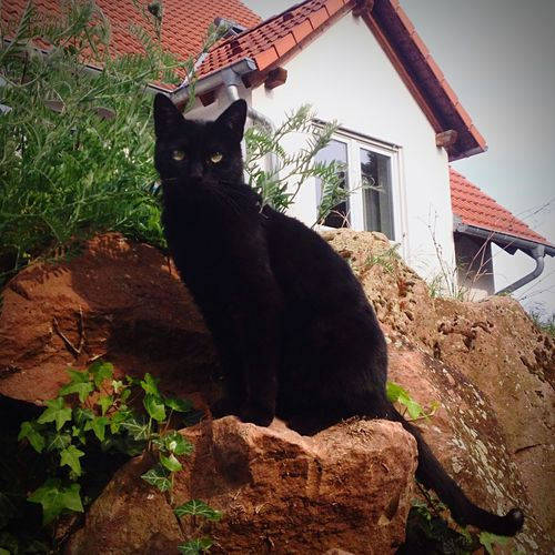 Mein Spatz Cat Cats Black Nature Pet Love Taking Photos Hanging Out Enjoying Life Hello World