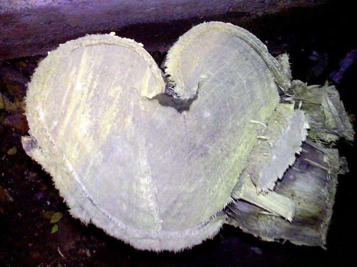Tree Stump Heart Shaped