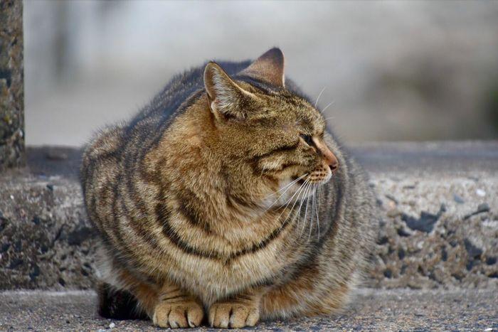Cat Stray Cat Cat Lovers Catportrait Catphotography Animal Photography Streetphotography Street Photography 野良猫 お散歩Photo じっと見てたくせにカメラ向けるとプイっとする😾笑