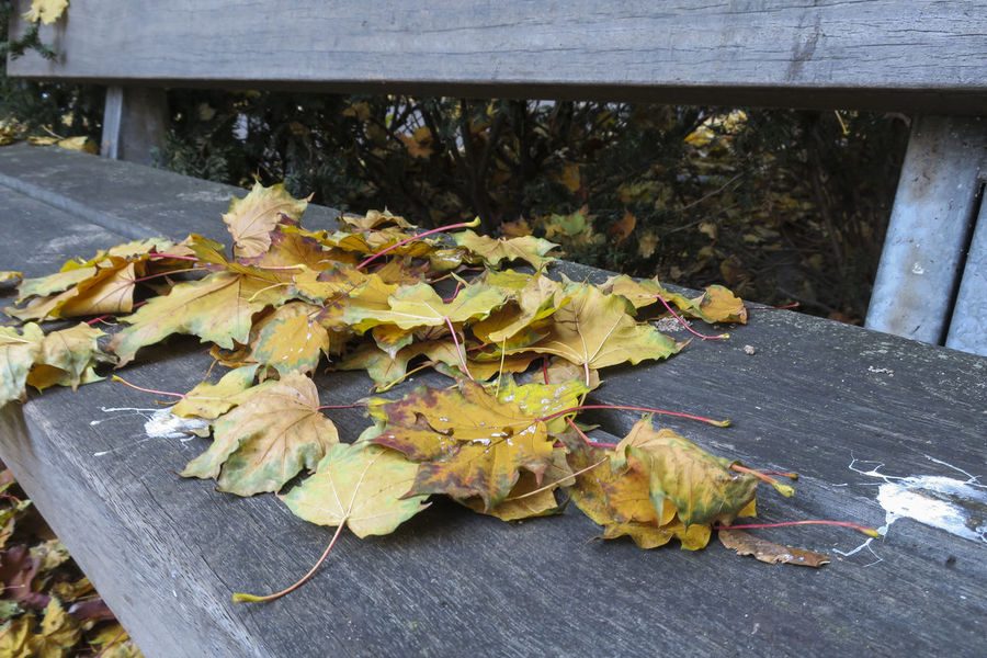 Autumn leaves on a bench Bench Bench Seat Wood Yellow Colour Bird Droppings Cold Days Cold Season Cold Temperature Silence Stormy Seasons Wooden Yellow Yellow Color