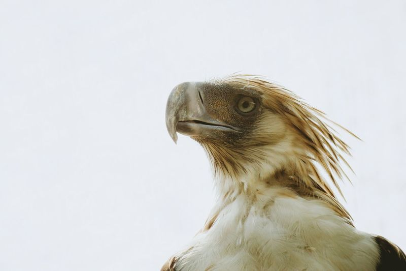 Trust your higher self. What I Value What Makes You Strong? What Does Freedom Mean To You? Wildlife Eagle Philippine Eagle Animals Birds Birds_collection VSCO