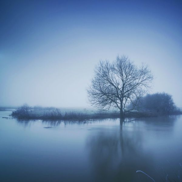 Moody Blues Northamptonshire Blue Color Cool Tones Blue Trees And Sky Tree_collection  TreePorn Lone Tree Bare Tree Tree Beauty In Nature Lone Tranquil Scene Tranquility Branch Cold Temperature Winter Outdoors Landscape Reflection No People