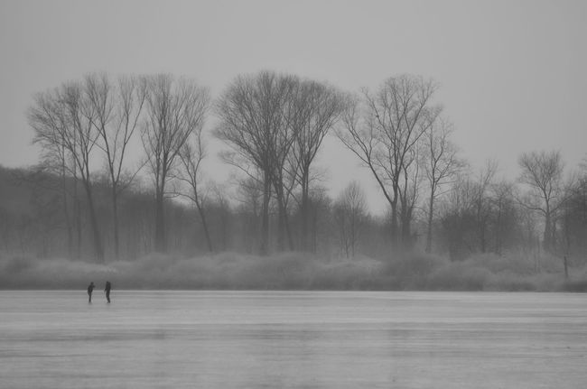 Two persons ice skating on a lake with trees Black And White Branch Cold Temperature Day Enjoyment Frozen Lake Grey Day Ice Ice Skating Lake Landscape Nature Outdoors Real People Sea Silhouette Sky Snow Tranquil Scene Tranquility Tree Two Persons Unrecognizable People Unrecognizable Person Winter