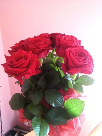 3 days ago I got flowers. Beautiful roses. I love my boyfriend. He's amazing men! Every day with him is mad <3 Love ♥ Flower Rose - Flower Flower Head Bouquet Rosé l4l #like4me #like4like L4l Liveform Like4follow Likeforlike Like4follower Like4likeback Like4shoutout Likeforfollow Like4followers Likeforcomment likeforafollow likeforlike likeforashoutout likeforfollowers likeforlikealways tags4l