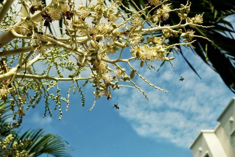 Bees And Flowers Bees Blue Sky Nature Photography Palm Tree Eyeem Insects EyeEm Nature Lover EyeEm Gallery