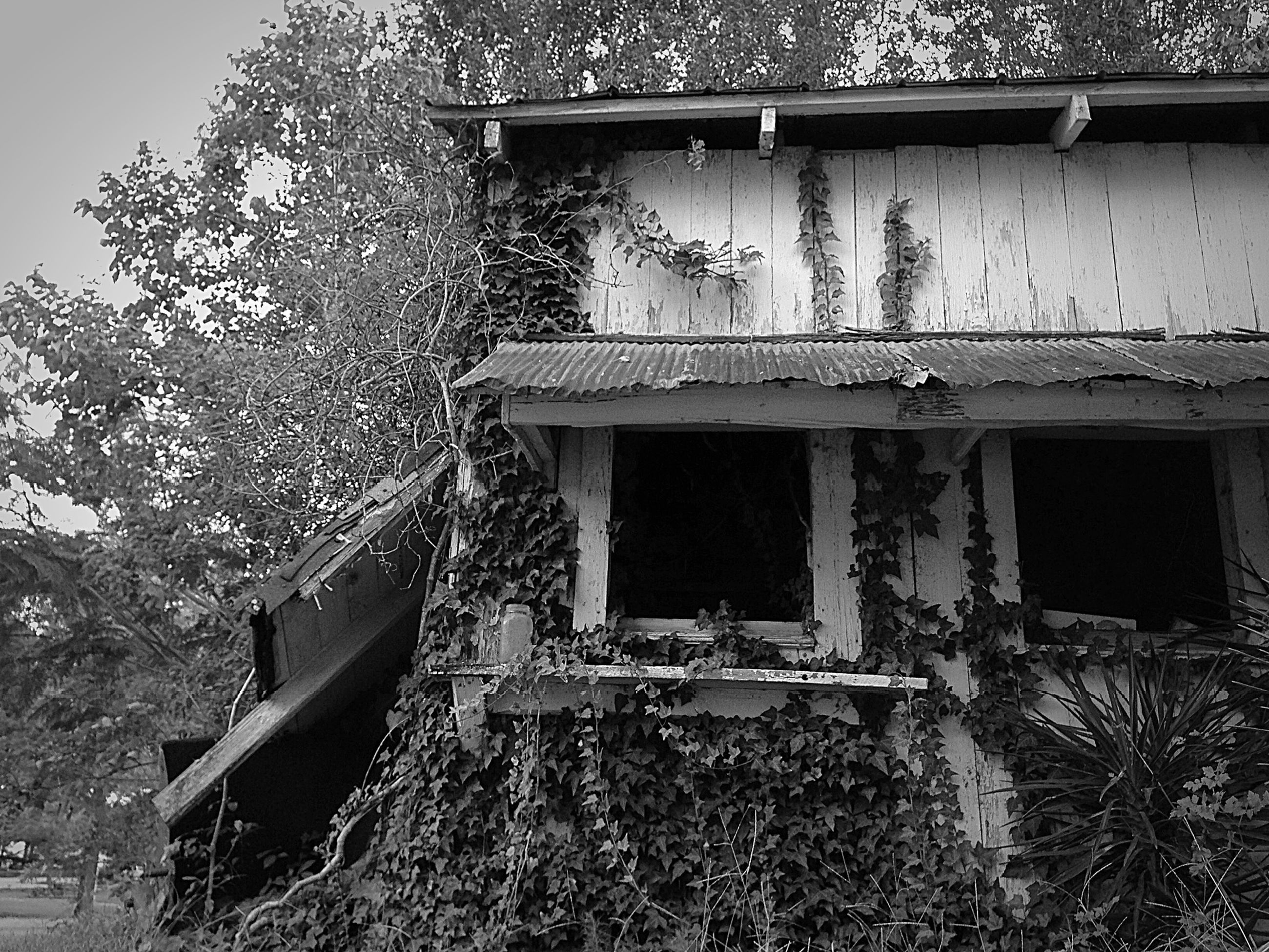 built structure, building exterior, architecture, house, window, tree, residential structure, abandoned, plant, growth, residential building, old, front or back yard, day, low angle view, damaged, outdoors, flower, obsolete, building