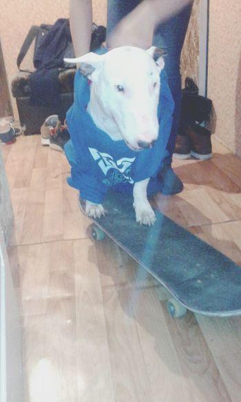 Skateboarding Friends I Love Beer Dogs