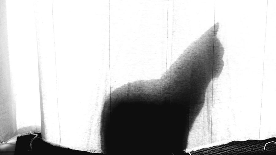 Shadowplay Boring Times Hide Spycat Maybe Katze Cat Behind The Scenes Wall - Building Feature Unrecognizable Person One Person Window