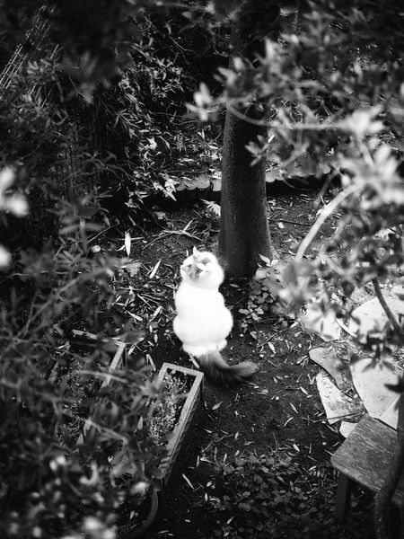My tiny fairy Petportrait Petphotography Noir Et Blanc Ragdoll Monochrome Bnw Cat Plant Tree Day No People Nature Growth Outdoors Tranquility High Angle View