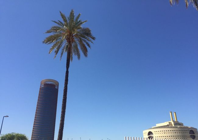 Building Exterior Low Angle View Architecture Palm Tree Built Structure Clear Sky Sky Building Exterior Low Angle View Architecture Palm Tree Built Structure Clear Sky Sky Tree Blue Plant Day No People Building Tall - High Tower Outdoors Sunlight Copy Space