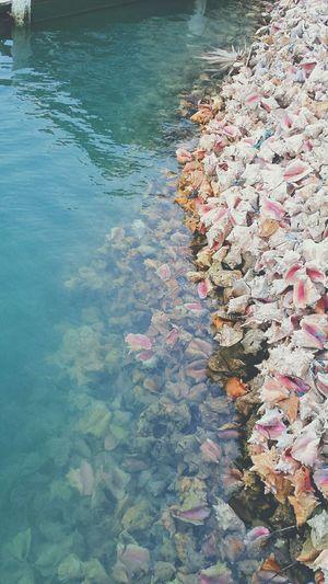 Ice Age Conch Shells Waste Wasteland