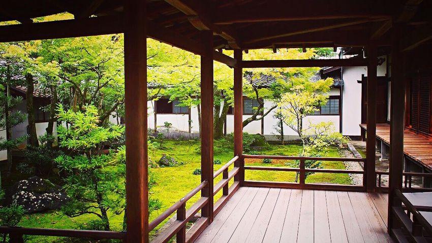 仁和寺 京都 Kyoto Kyotojapan Kyototravel Kyoto, Japan Kyoto Temple Kyoto Garden 3XSPUnity Travel Destinations Japanese Garden Kyototrip Enjoying Life Relaxation Relaxing Hello World