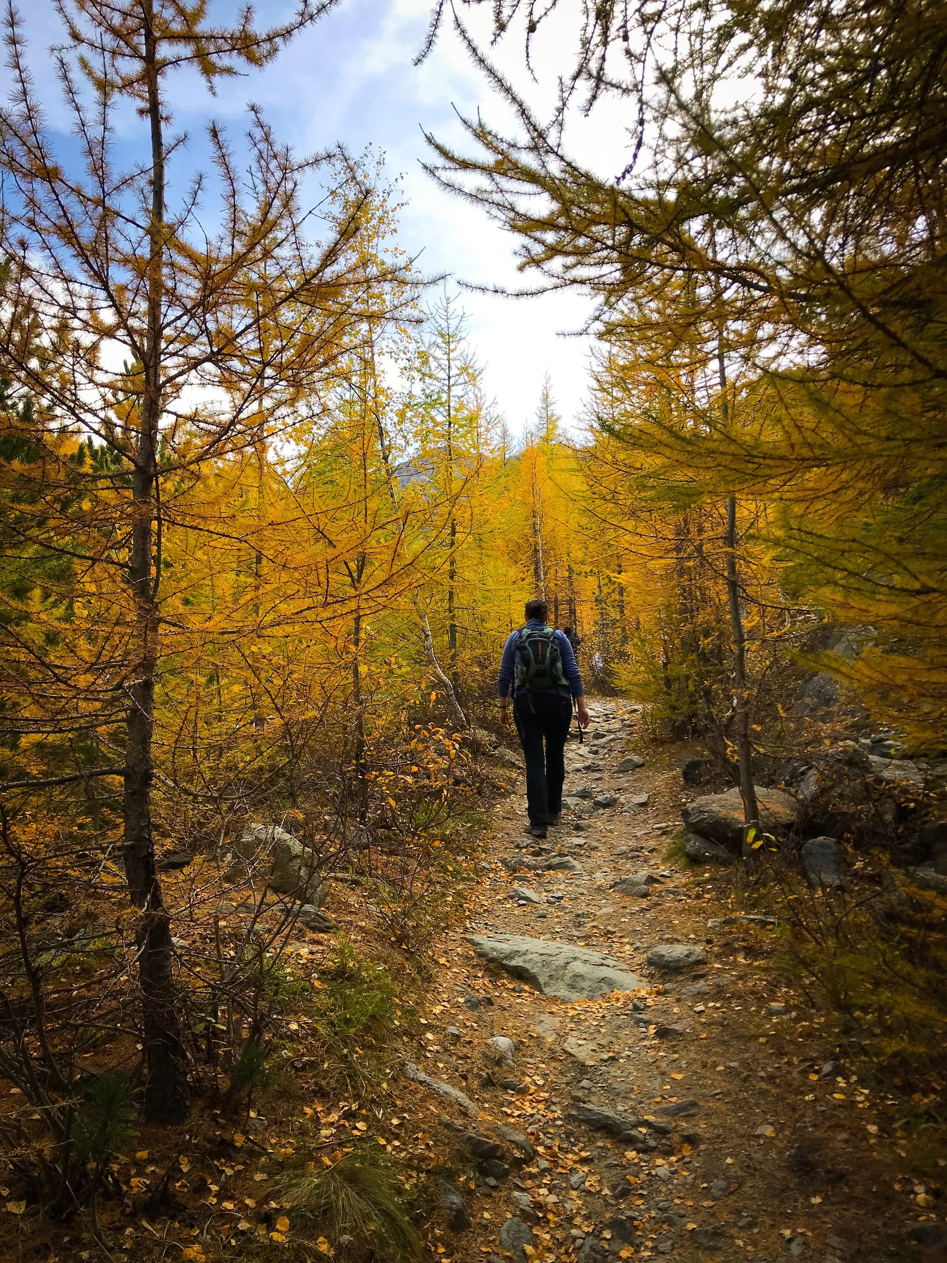 tree, forest, full length, one person, autumn, walking, nature, beauty in nature, rear view, outdoors, tranquil scene, scenics, leisure activity, day, real people, hiking, tranquility, lifestyles, sky, landscape, men, people