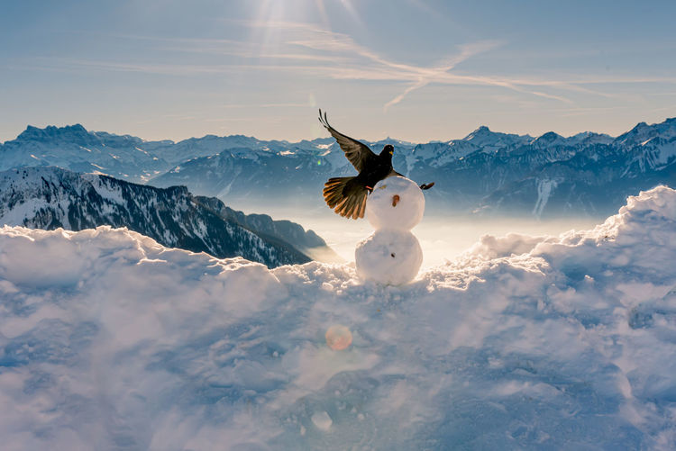 View of horse on snow covered mountain against sky