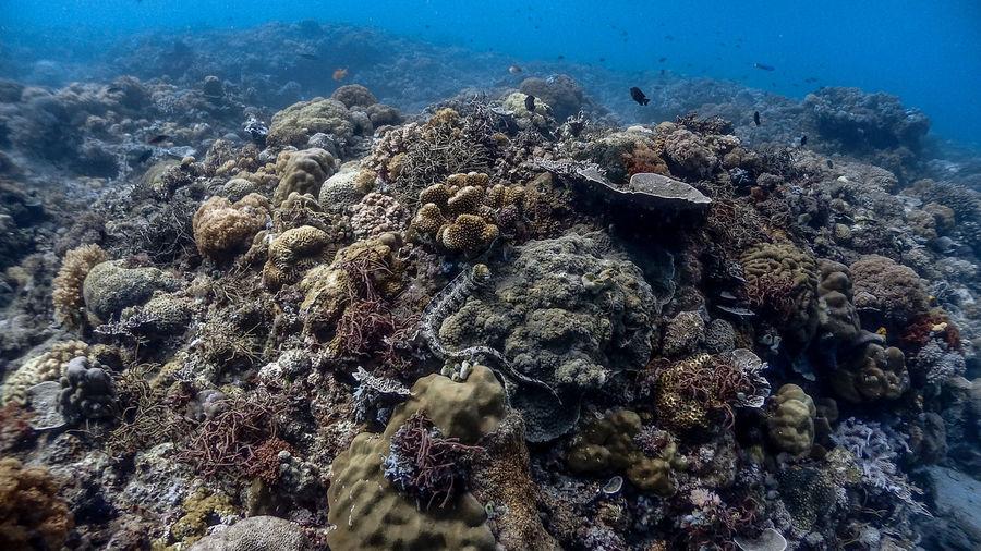 Snowflake moray eel at pagkilatan
