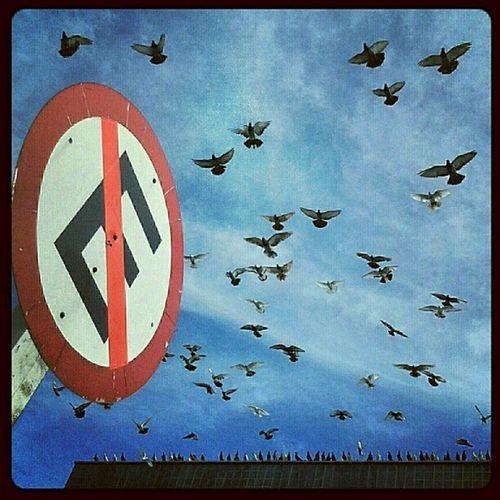 Voar é a verdadeira sensação de liberdade TAMFoto