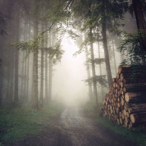 Misty forest with wood pile