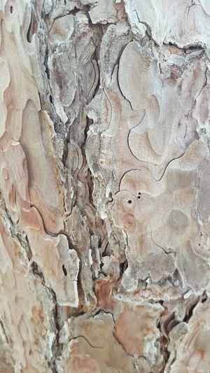 Pine bark out on the island Wildlife & Nature Bark Pine Upclose  Mainewilderness Mainephotography Maine Trees Tree Bark Beautiful Bark