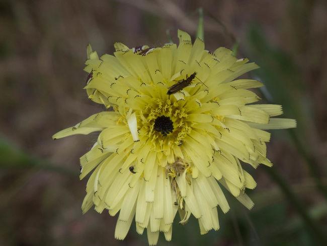 Blooming Fiori Flower Flower Head Inseto Nature Sardegna Sardinia