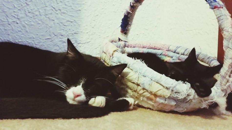 Animal Love Black Cats Crazy Cat Lady Cat Watching Petlover Relaxing Kitty Cat Tuxedo Cat Cat♡ Simple Life