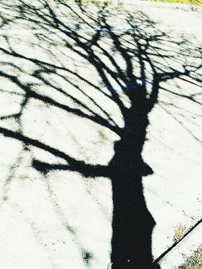 Lifestyles Outdoors Tree Artphoto Sillouette Antropomorfisme Antropomorfo