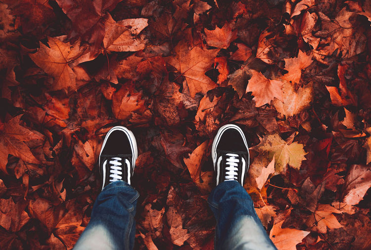 Personal Perspective Autumn Shoe Low Section Leaf Plant Part Change Real People One Person Human Body Part Human Leg Body Part High Angle View Lifestyles Standing Unrecognizable Person Nature Leisure Activity Directly Above Leaves Outdoors Maple Leaf Human Foot Jeans Human Limb