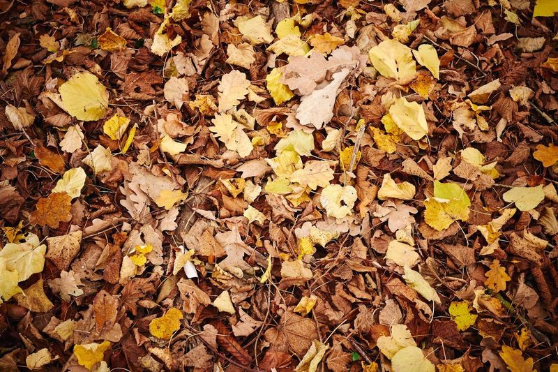 Autumn Plant Part Backgrounds Yellow No People Nature Close-up Beauty In Nature Outdoors Natural Condition Autumn Collection Fall Leaf