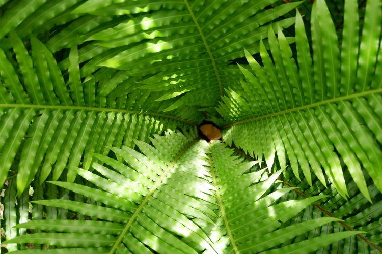 Leaf Tree Frond