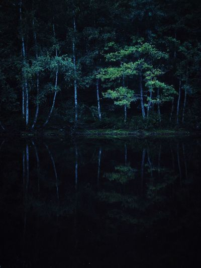 Mobilephotography Mobile Iphoneonly IPhoneography IPhone Night Woods Forest Tree Reflection Night Water No People Tree Nature Reflection Astronomy Lake Outdoors Backgrounds Green Color Plant Scenics - Nature